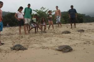 Ubatuba-turismo-ecologico-projeto-tamar-512-bx