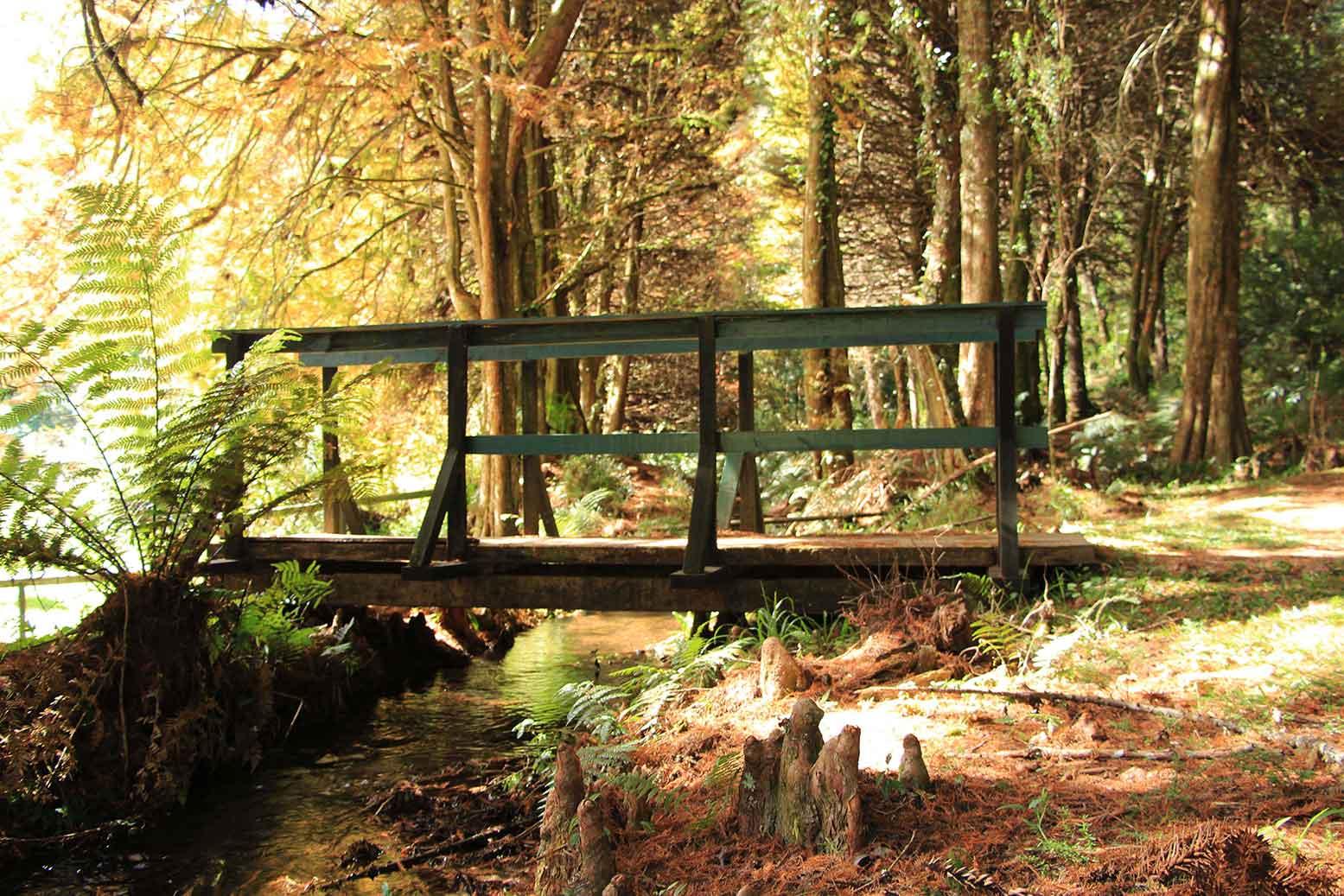 Campos-do Jordao-Meio-Ambiente-Horto-Florestal-2-Marcio- Masulino