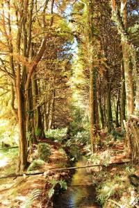 Campos-do Jordao-Meio-Ambiente-Horto-Florestal-3-Marcio- Masulino