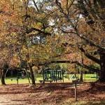 As riquezas do horto florestal