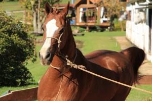Campos-do-Jordao-Turismo-Aventura-Tarundu-Cavalo-IMG_3633-bx