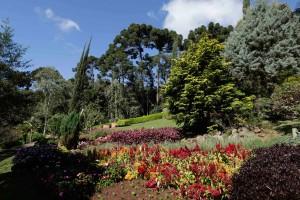 Santo-Antonio-do-Pinhal-Meio-Ambiente-Jardim-dos-Pinhais-_MG_5872-bx