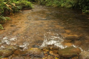 Ubatuba-cultura-comunidades-quilombo-224-bx