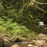 Ubatuba-cultura-comunidades-quilombo-317-bx