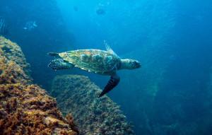Ubatuba-esporte-mergulho-188-bx