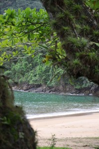 Ilha Anchieta-Ubatuba-meio-ambiente-ilha-anchieta-DSC_0389-bx