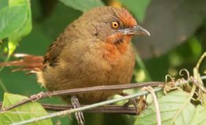 ubatuba-meio-ambiente-ornitologos-4-bx