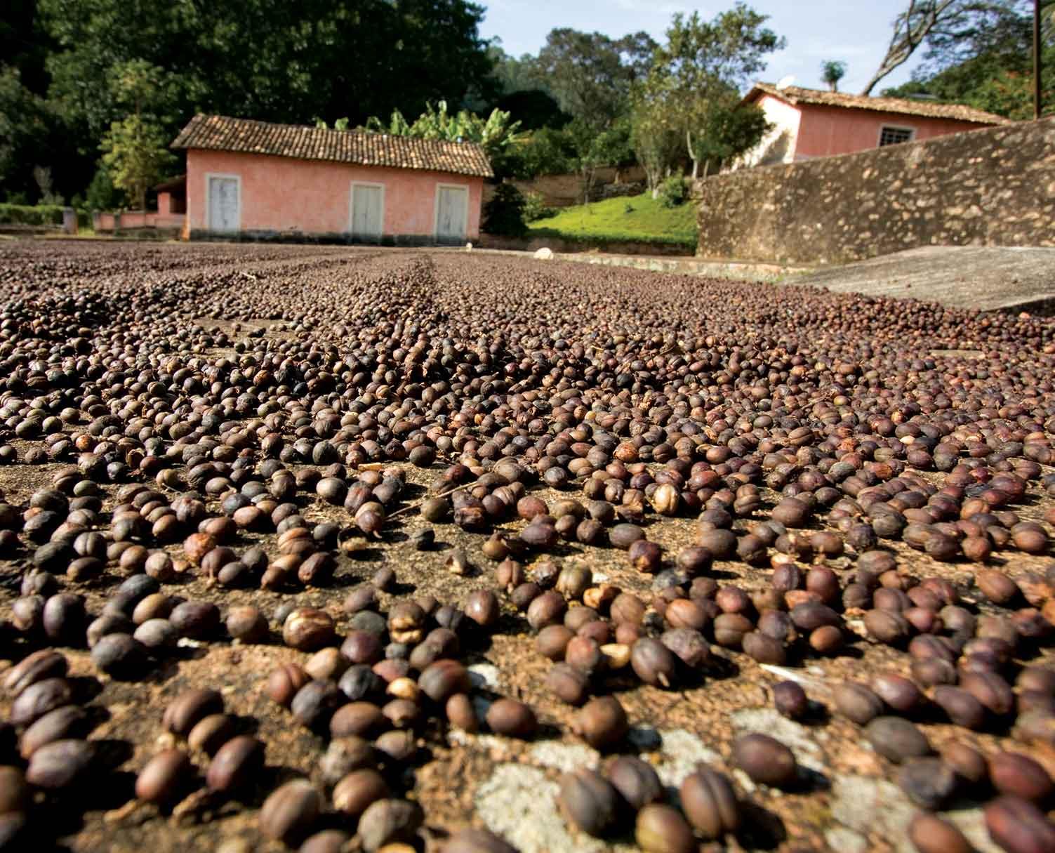 Atibaia-historia-fazenda-terreiro-secagem-cafe-bx