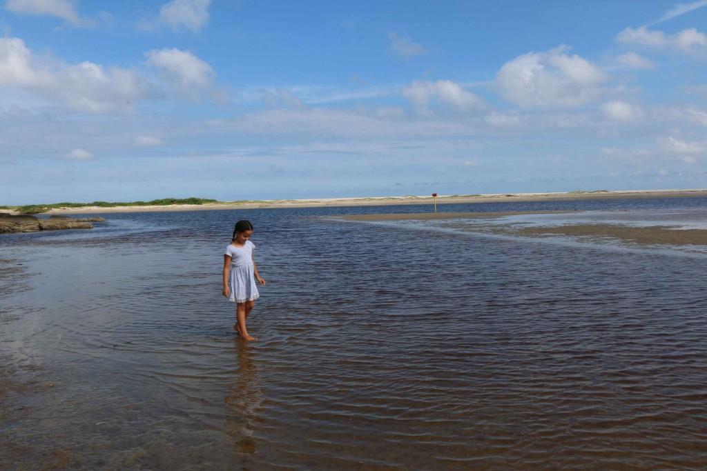 rp_Bertioga-Meio-Ambiente-Praia-do-Itaguare-IMG_8101-bx-1024x683.jpg