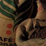 Cultivo de Café na Mantiqueira