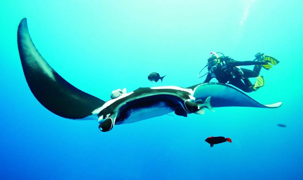 Costa-da-Mata-Atlantica-Esportes-Mergulho-Shutterstock-bx