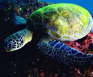 Costa-da-Mata-Atlantica-Esportes-Mergulho-Shutterstock-bx (2)