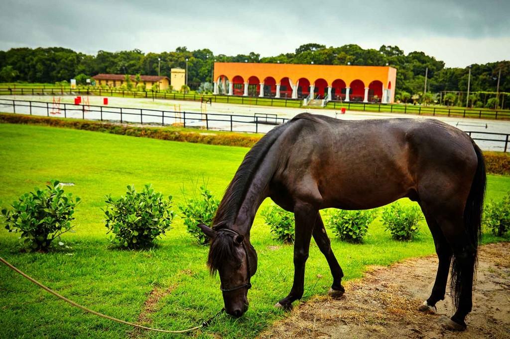 Hípica Itanhaém-Turismo-Rural-Hipica-Cavalos-ft-Alf-Ribeiro-bx