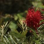 Itatiaia-Meio-Ambiente-Parque-Nacional-Flora-Vermelha-bx