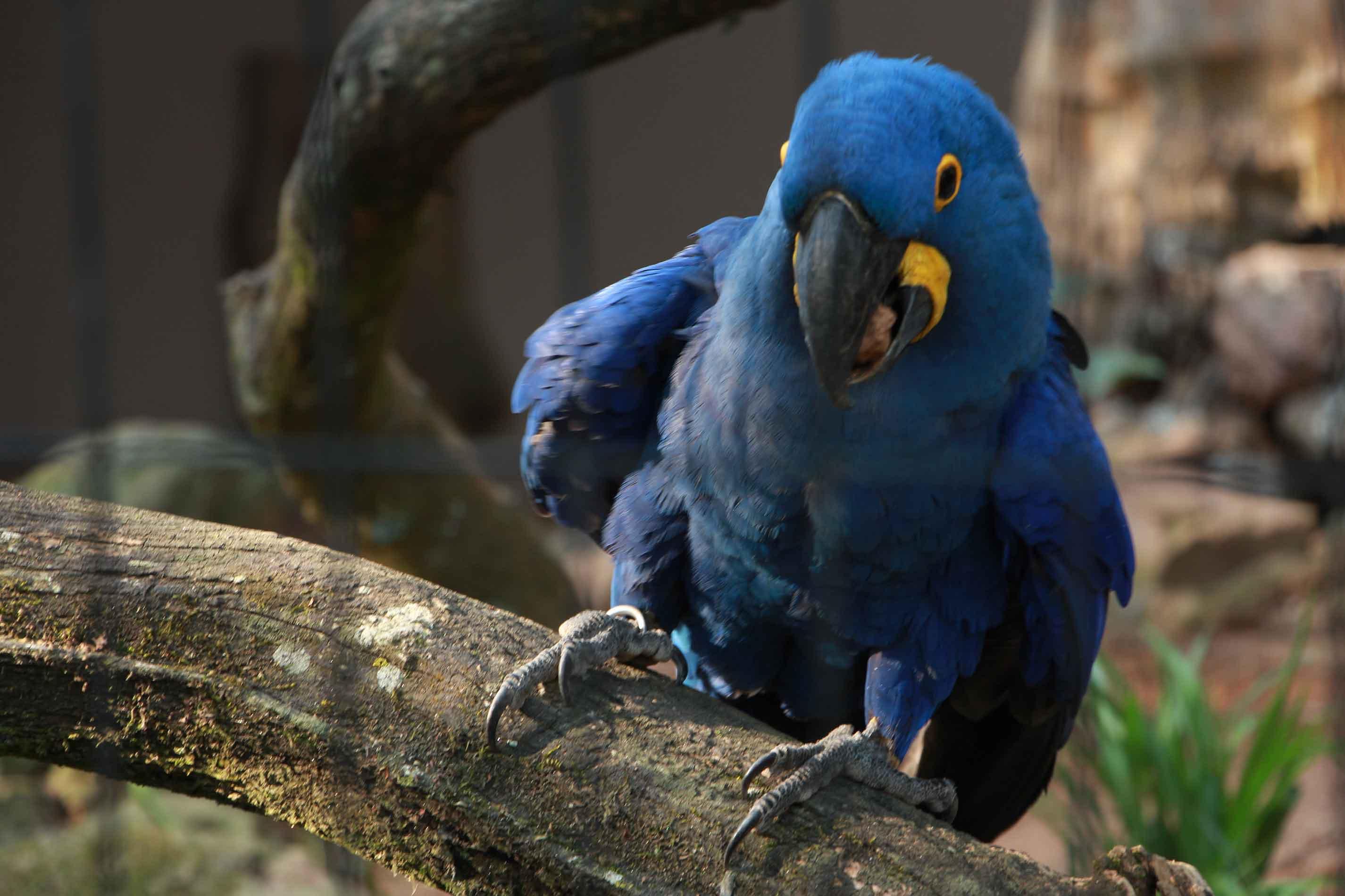 Itatiba-Turismo-Zooparque-Marcio-Masulino-IMG_4278-bx