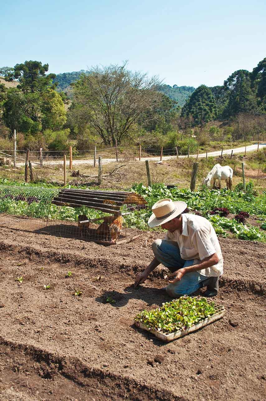 Mantiqueira-Aromas-e-Sabores-Plantacao-Organicos-Roberto-Torrubia-bx