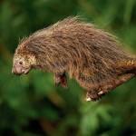 Fauna da Mantiqueira