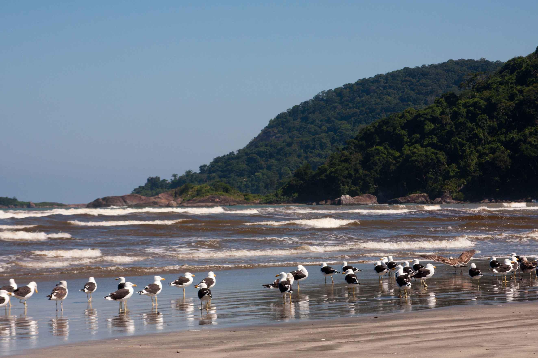 Peruíbe-Meio-Ambiente-Gaivotoes-Jureia-Itatins-bx