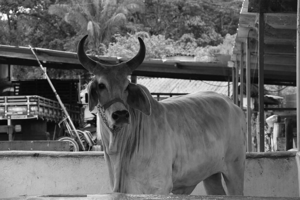 Peruibe-Turismo-Rural-rancho-arco-iris-MMasulino-IMG_7292-bx