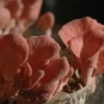 Cogumelos – Serra da Mantiqueira