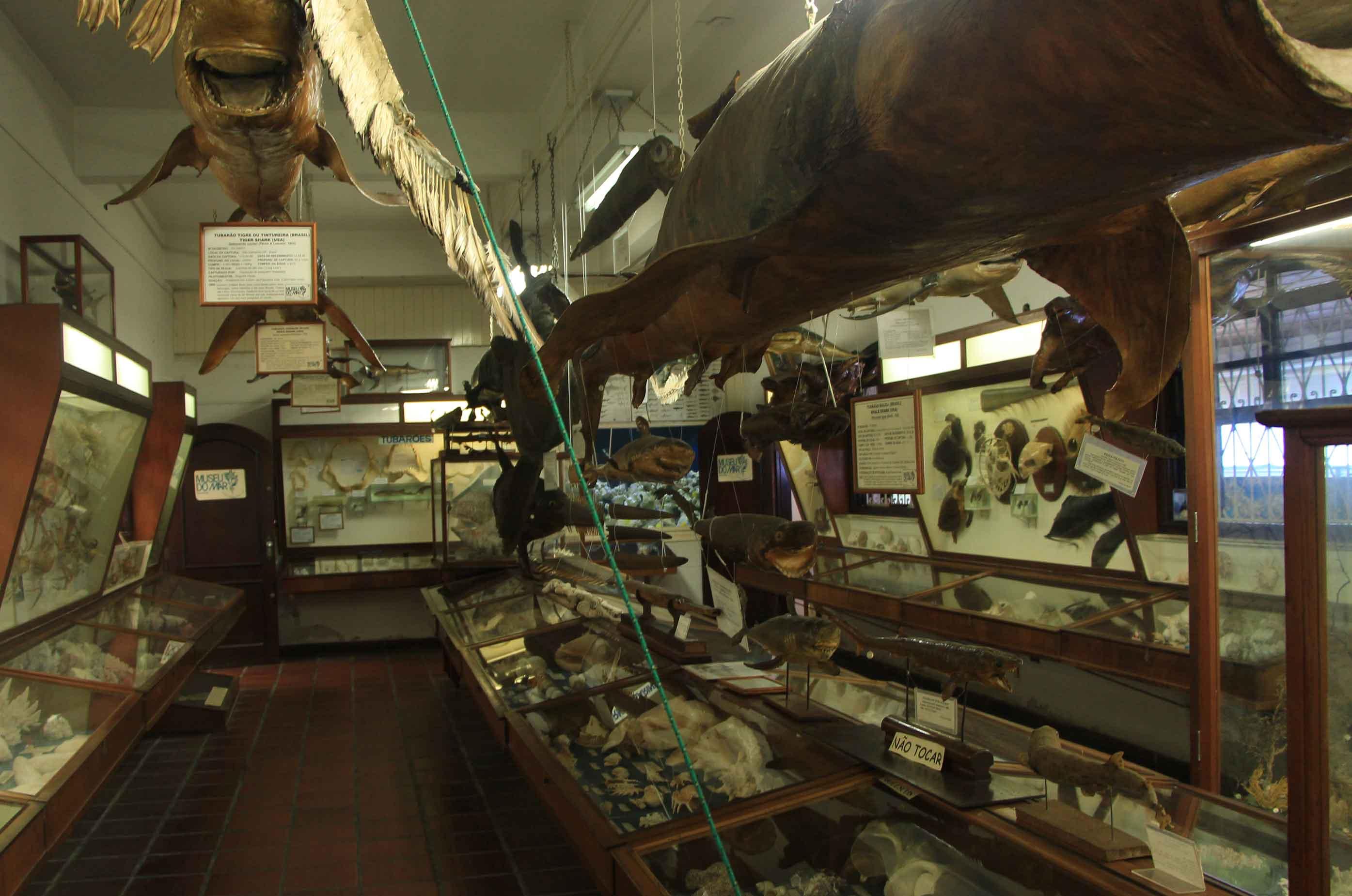 Santos-Museus-Museu-do-Mar-interior-bx