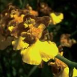 Flora – Atibaia