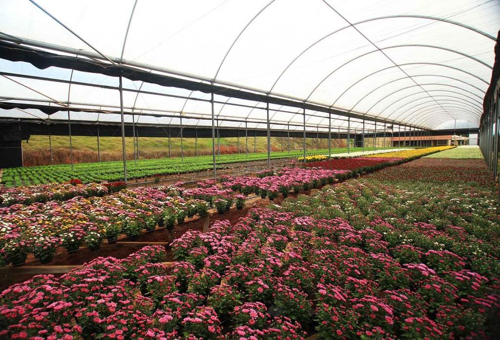 Flores de Atibaia-atibaia-turismo-estufa-flores-IMG_1105-bx