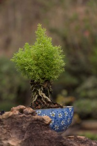 atibaia-turismo-rural-flores-bonsai-ft-Marcio-Masulino-IMG_8045-bx