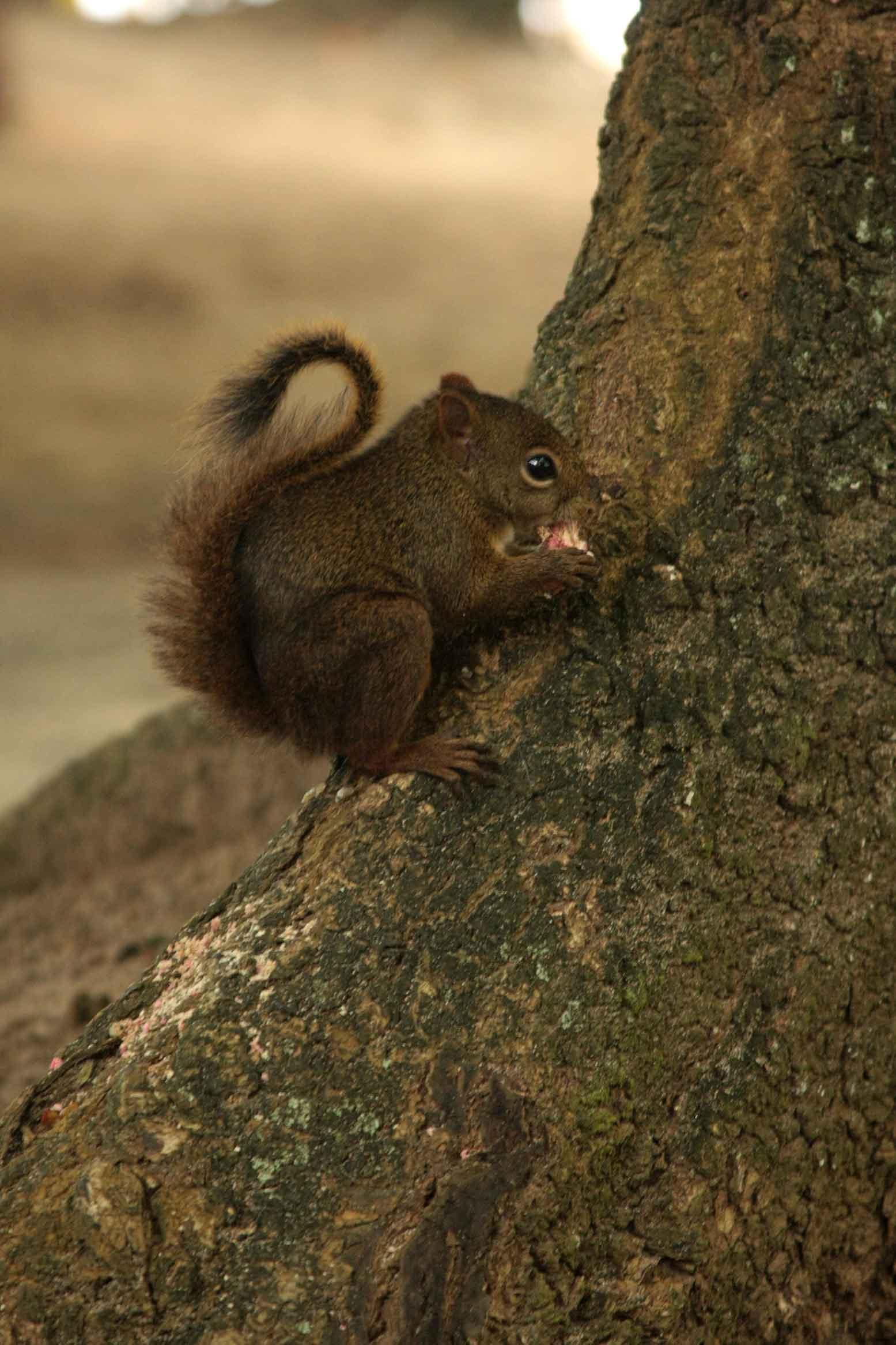 ilhabela-meio-ambiente-caxinguele-esquilo-321-bx