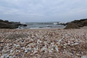 itanhaem-Meio-Ambiente-praia-conchas-IMG_6212-bx