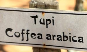 itatiba-historia-cafe-3