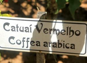 itatiba-historia-cafe-catuai-vermelho-coffea-arabica-bx