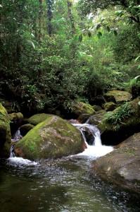 sao-sebastiao-meio-ambiente-flora-1-bx
