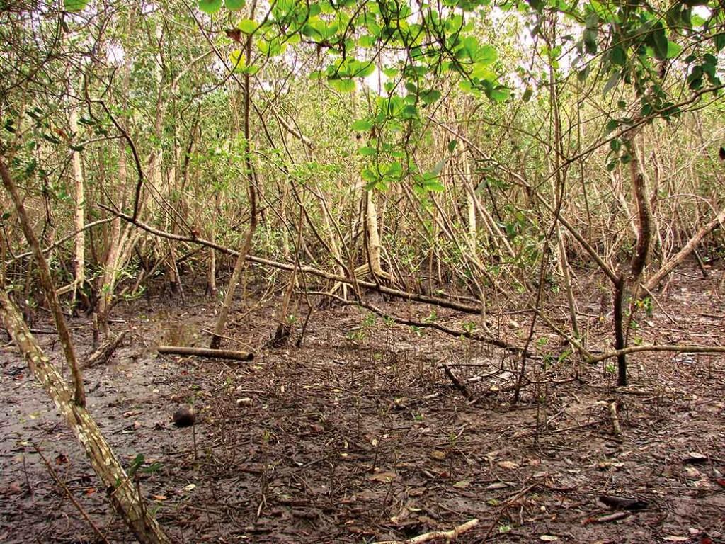 sao-sebastiao-meio-ambiente-mangue-3-bx