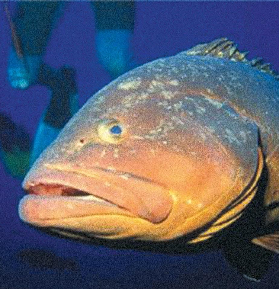 Fauna Marinha de Ubatuba-meio-ambiente-fauna-marinha-1-bx