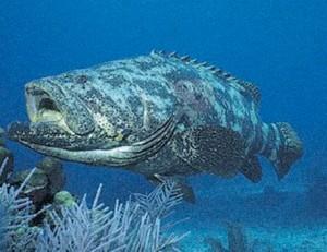 Fauna Marinha de Ubatuba-meio-ambiente-fauna-marinha-4-bx