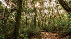 valinhos-turismo-rural-ecologico-cocais-trilhas-bx
