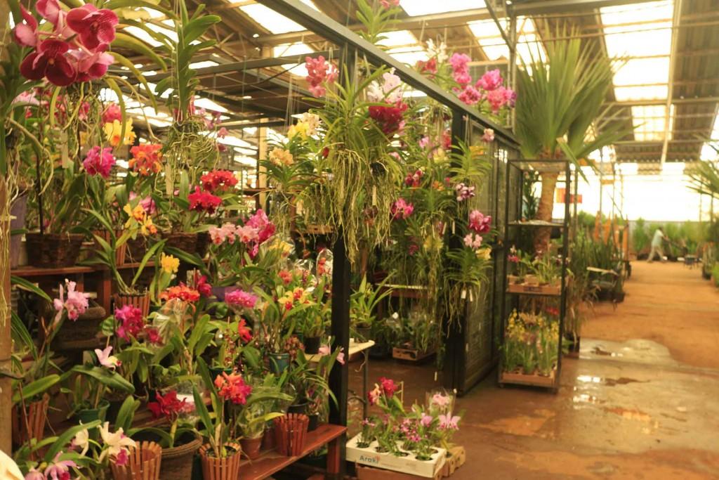 Mercado de Flores – Ceasa Campinas-campinas-turismo-ceagesp-mercado-de-flores-_mg_4475-bx