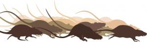 santos-lendas-ratos-shutterstock_152280551