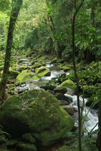 Meio Ambiente em Santos - Cabuçu-Caetê