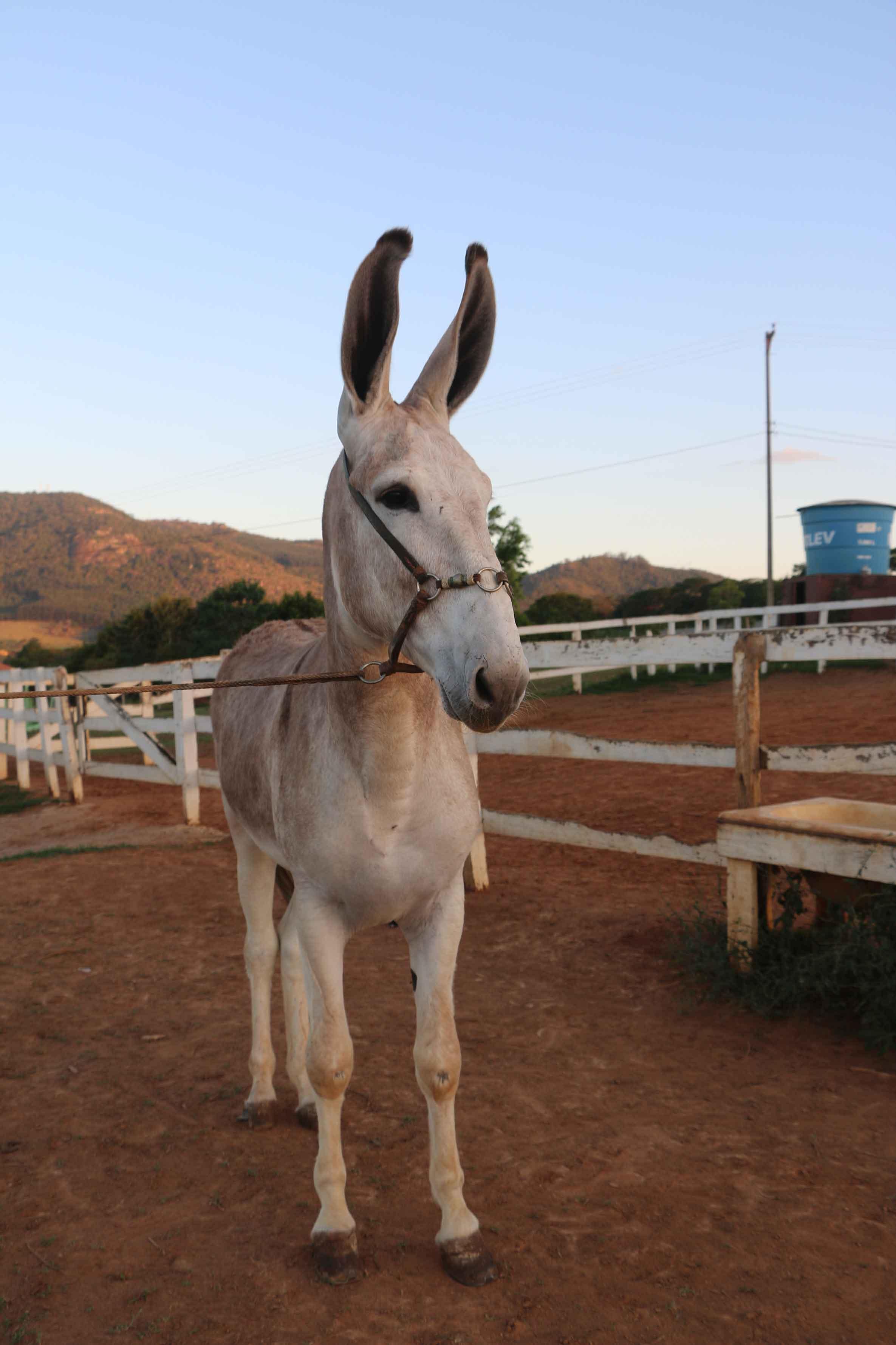 Rancho Tropeiro-braganca-paulista-turismo-rural1796-bx