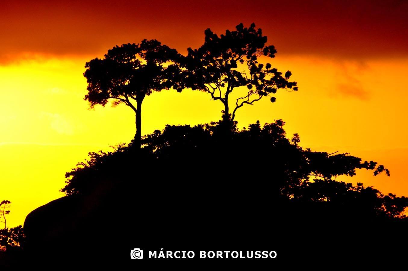 Marcio Bortolusso
