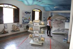 Fotos Instituto Boto Cinza