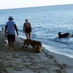 Passeios Pet na praia: como conciliar as diversas opiniões?