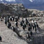 Isla de Los Pájaros em Ushuaia