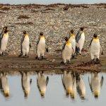 Os pinguins da Isla Martillo em Ushuaia