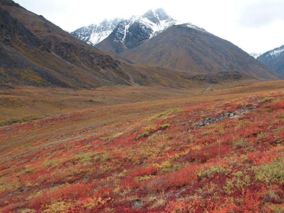 Tundra em Ushuaia