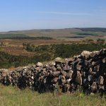 Muros de taipa e a arquitetura nas Serras Catarinense e Gaúchas