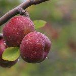 Aromas e sabores das Serras Gaúcha e Catarinense