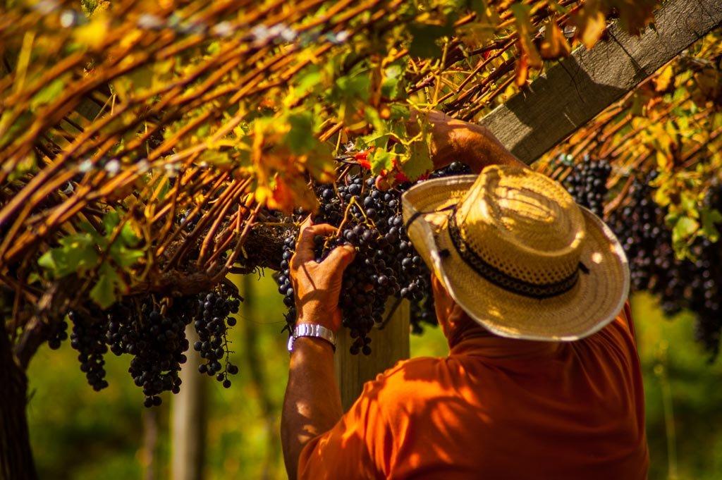 Vinícolas nas Serras Catarinenses e Gaúcha